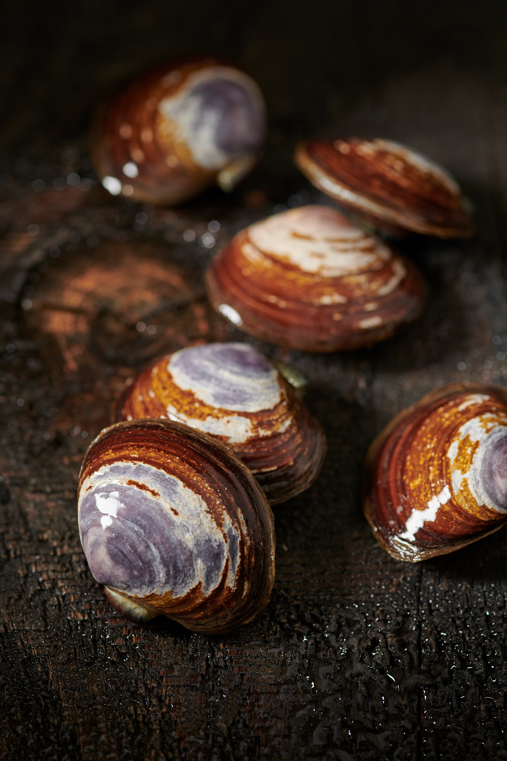 Clams Still Life | Steve Hansen food photography Seattle
